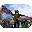 Giant Bogong Moth
