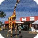 Gemma Giraffe and Ranger Stilt Walkers