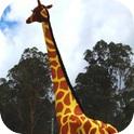 Gemma Giraffe and Ranger Stilt Walkers-2