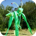MANTIS STILT WALKERS  (VIC / NSW)