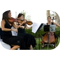 The String Collective - String Quartet-1